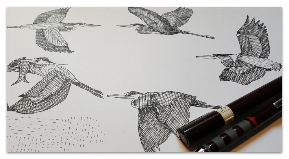 great blue herons work in progress illustration sharon turner