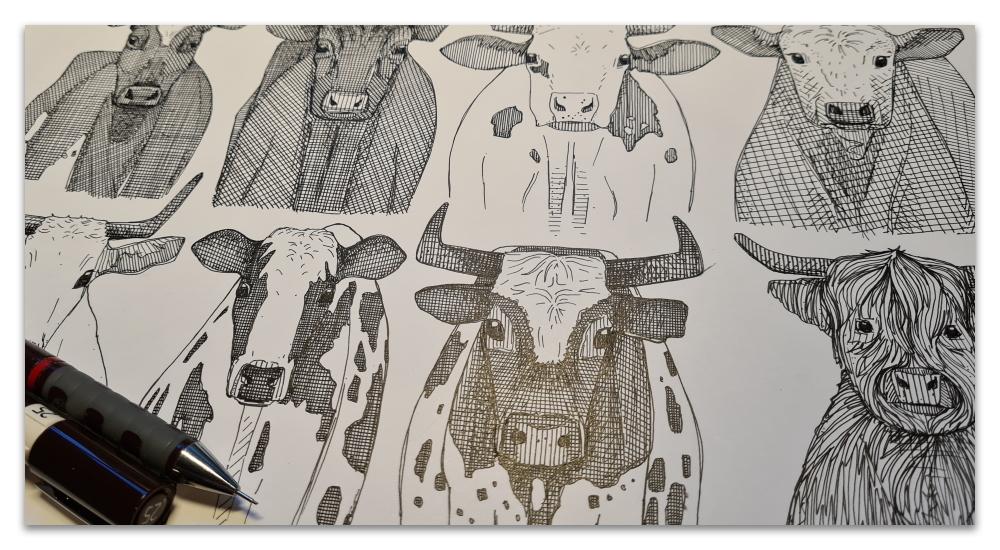 just ox work in progress illustration sharon turner