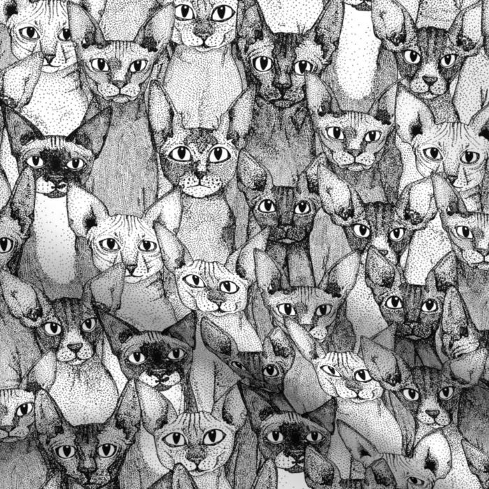 just sphynx cats black white spoonflower sharon turner