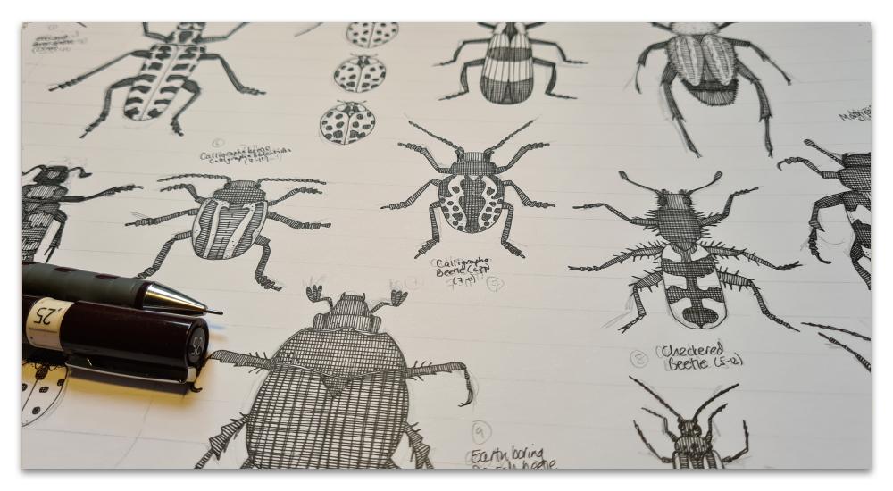beetles work in progress sharon turner illustration